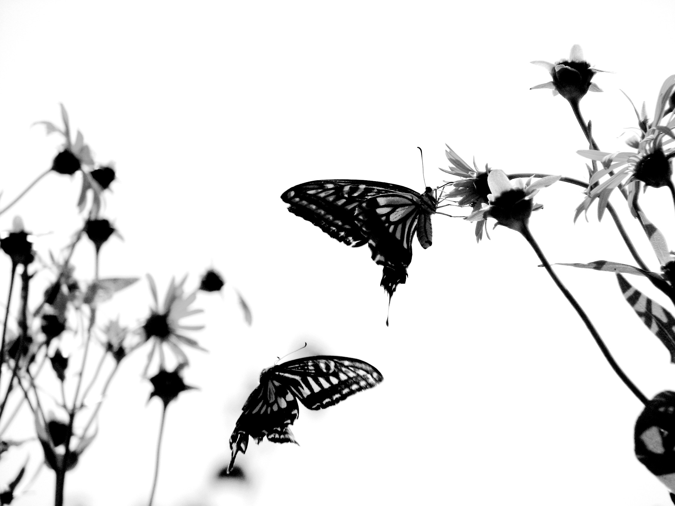 Butterfly Background Images